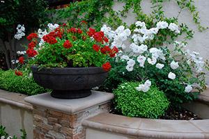 Jenner-Back-Pottery-Roses